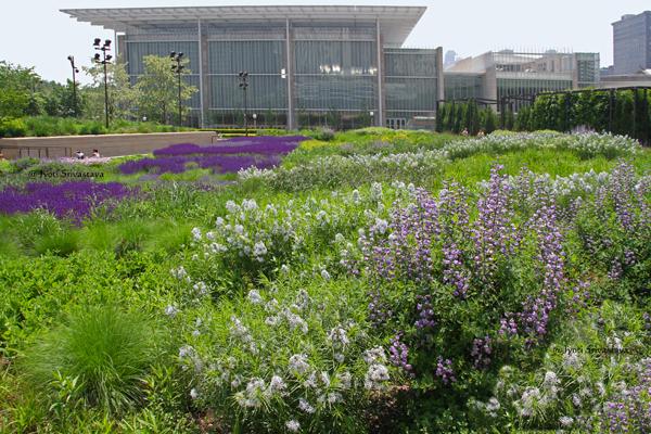Lurie Garden, Millennium Park.