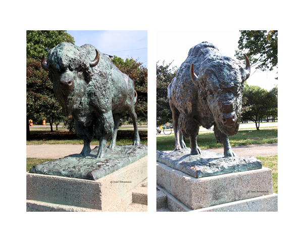 Bisons - by Edward Kemeys