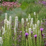 Lurie Garden - Gustafson Guthrie Nichol Ltd, Piet Oudolf and Robert Israel