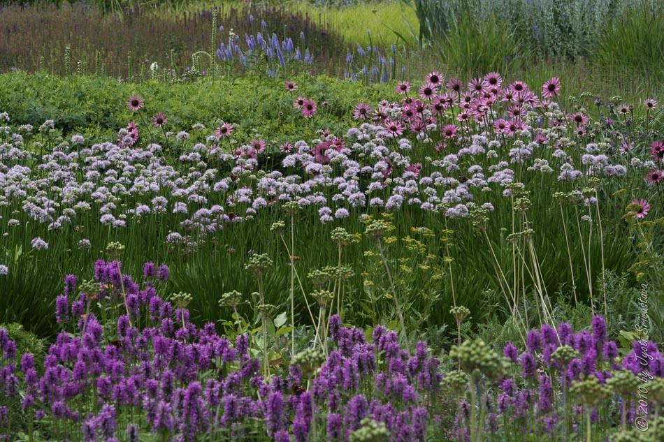 Lurie garden gustafson guthrie nichol ltd piet oudolf for Piet oudolf plant list