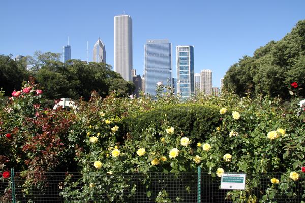 Rose Garden, Grant Park.