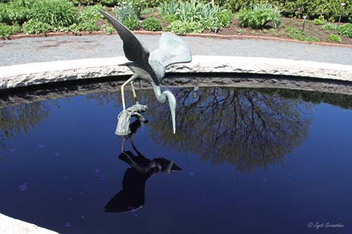 Blue Heron - by Gregory Glasson