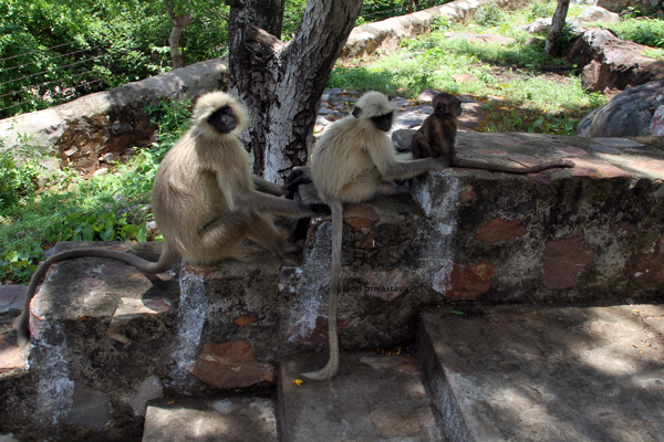 Rajgir: Mountain monkeys