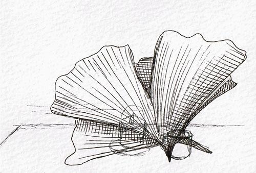 Ginkgo doodles - by Jennifer Dickson