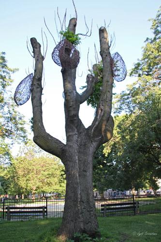 Vivian Visser in Central Armour Park