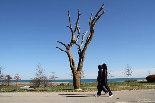 Carved tree by Ben Schlitz