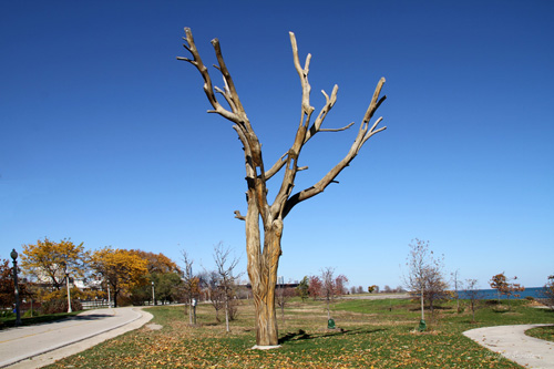 Tree Art along Lakefront Trail