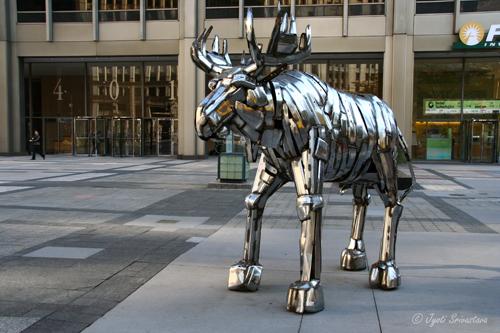 Moose - by Joan Kearney