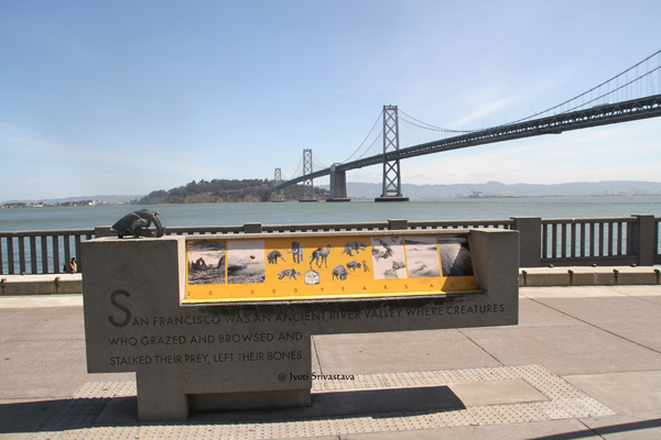California state fossil sabre-tooth cat , San Francisco / California.
