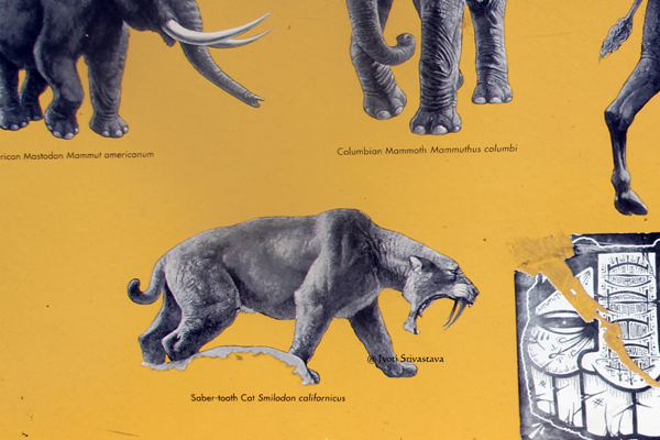 California state fossil sabre-tooth cat