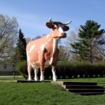 """Gertrude"" the Guernsey Cow"