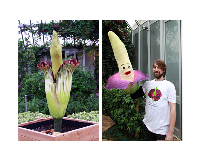 Titan Arum and the public puppet Titan Taylor