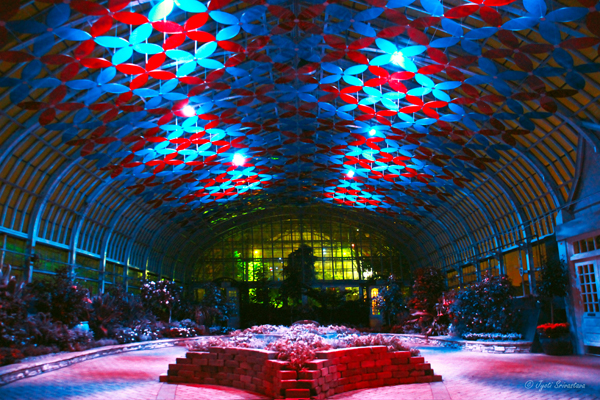 Solaris - Florescence / Show Room - Garfield Conservatory