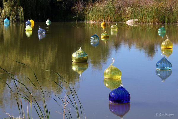 Walla Wallas - by Dale Chihuly