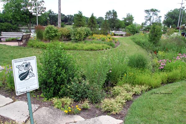 Bioswale / Monarch Waystation  / Snnissippi Gardens, Rockford.