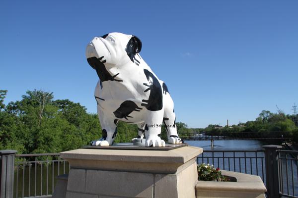 Bulldogs Unleashed, Batavia.